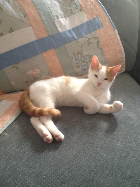My kitten Jake