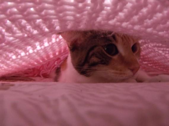 cat blanket 2