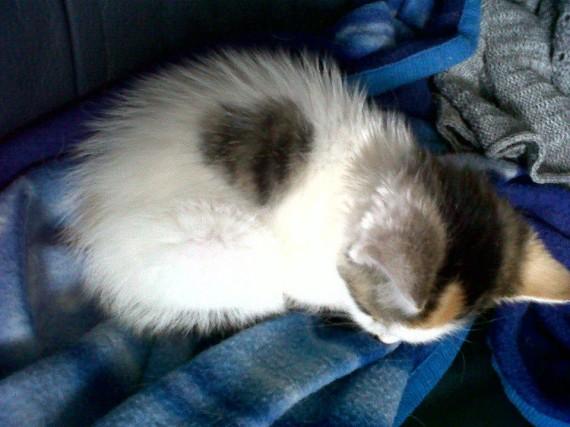 my kitten ziva
