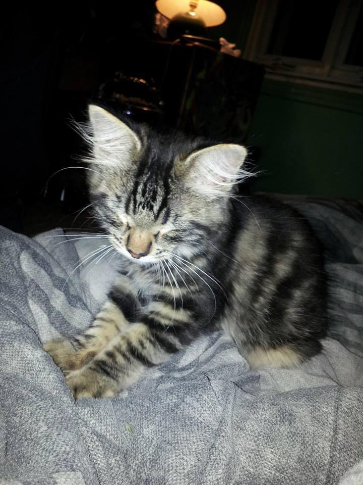 my perfect kitten