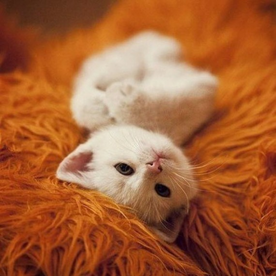 CUTE KITTEN ORANGE RUG