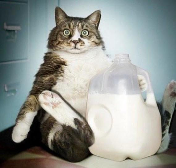 So I got sa milk problem