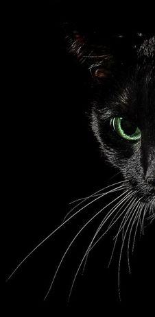 black cat side face