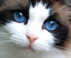 blue eyes brown face