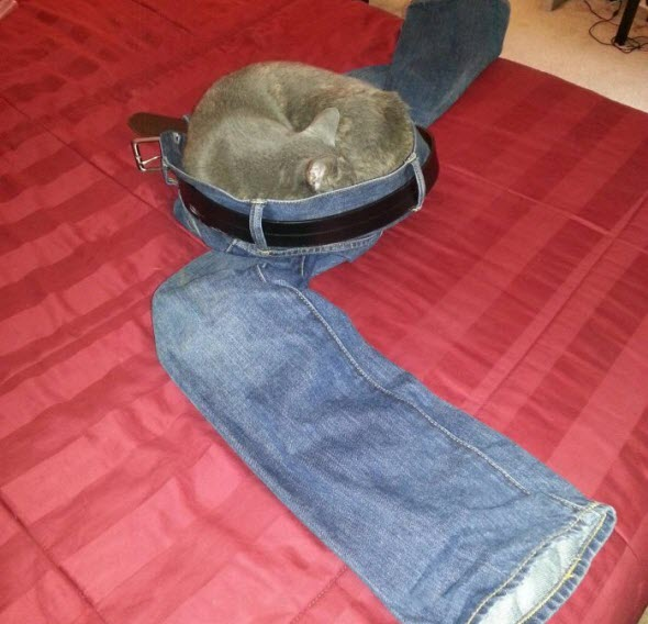cat in your pants