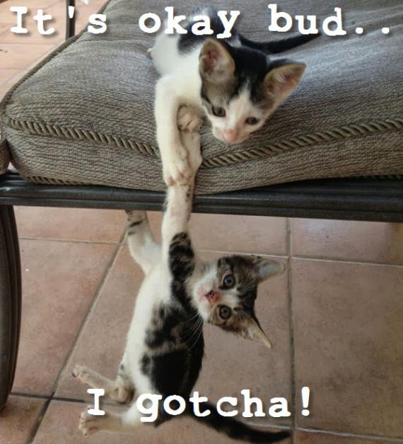cat rescue fall