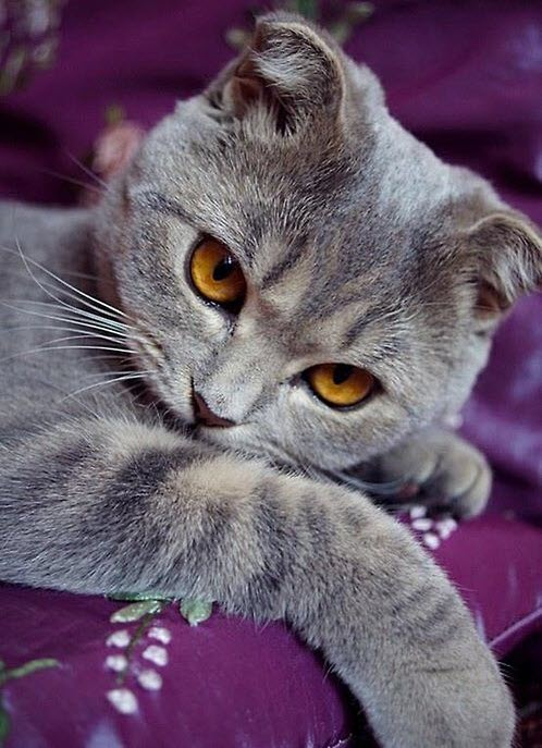 cute in purple