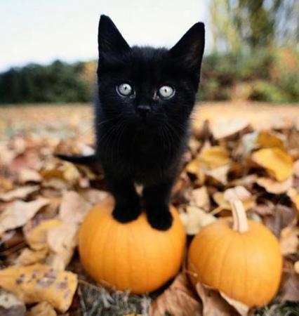 halloween kitty pumpkin