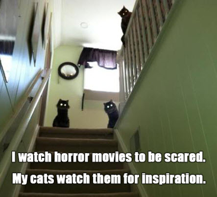 horror kitties