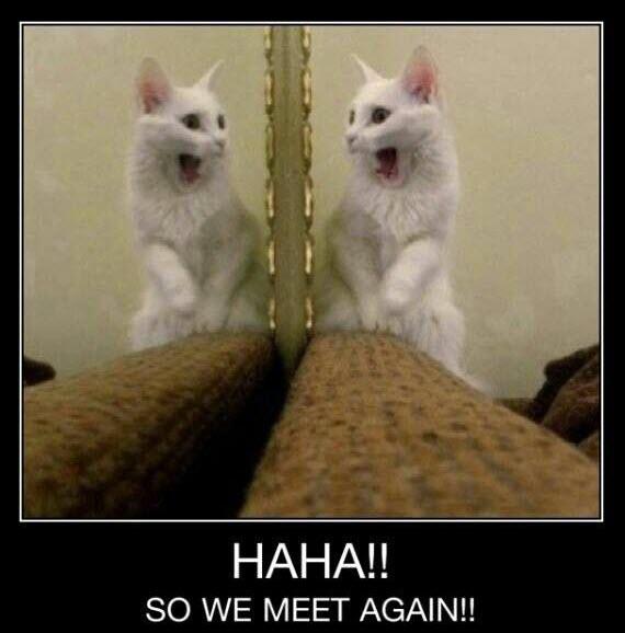 mirror cat scare