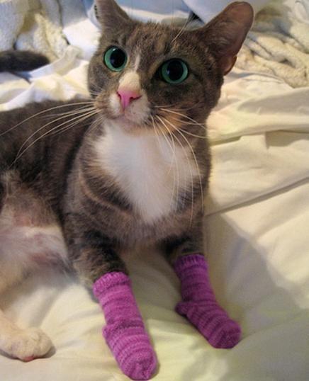 mittens for kittens