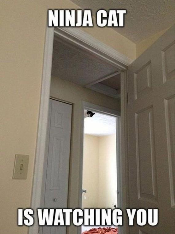 ninja cat watching