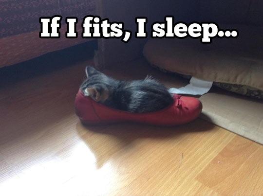 shoe sleep kitten