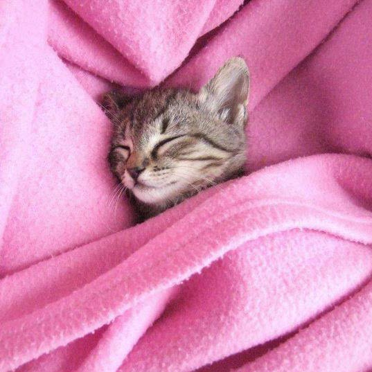 snug under rug kitty