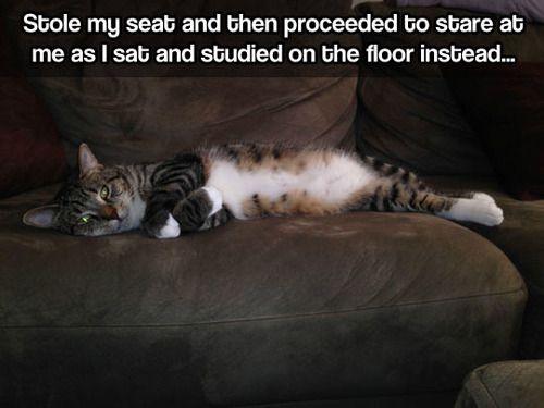 stole my seat