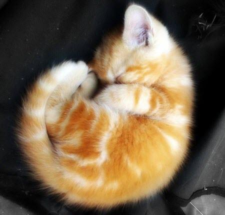 tiny snail cat