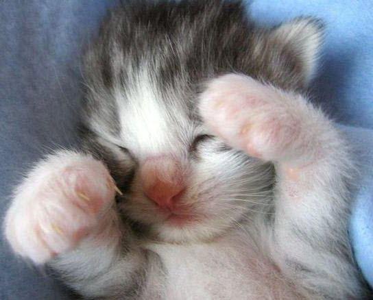 tiny tiny kitten