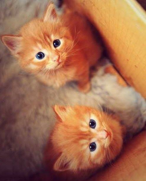 2 ginger blue eyes