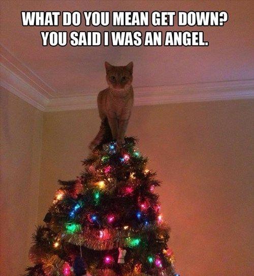 angel cat