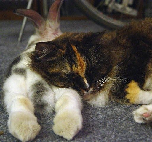 bunny butt pillow