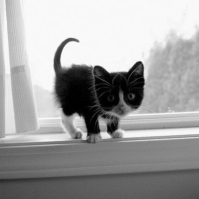 bw kitten indowsill