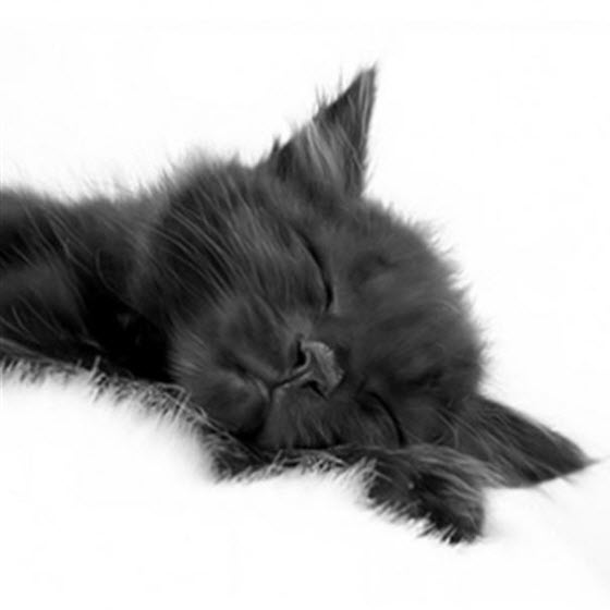 bw kitten white rug