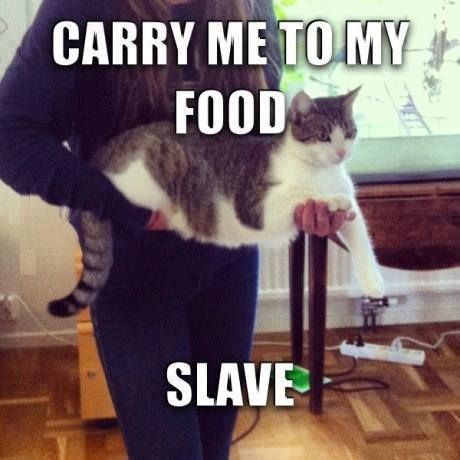 carry to food