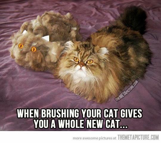 cat brush cat