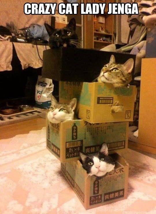 cat lady jenga