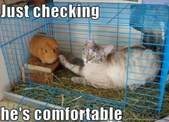 comfortable hamster