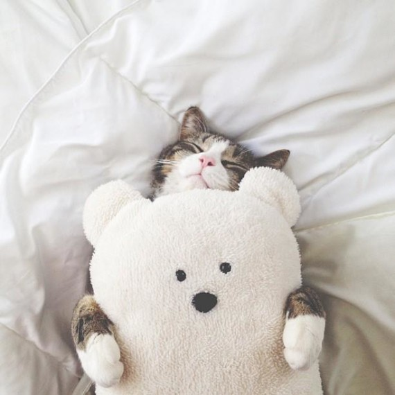 happy bear cuddle cat