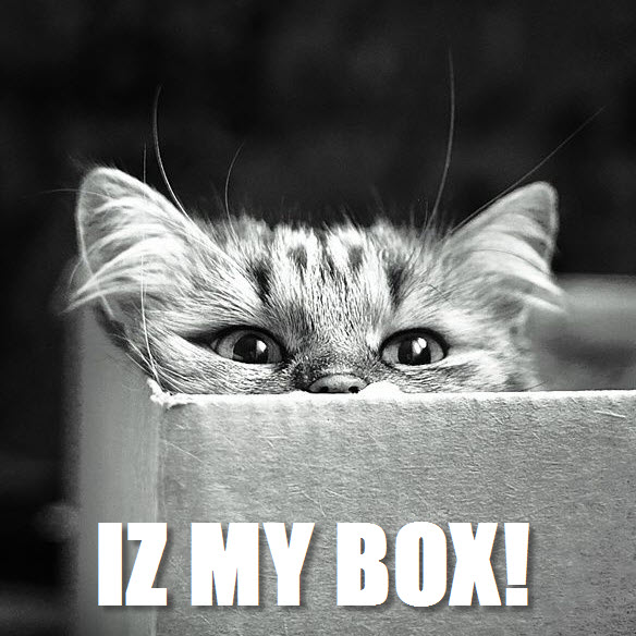i am in the box