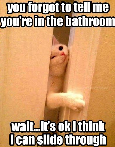 in the bathroom cat