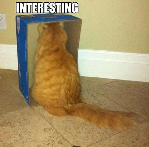 interesting cat box