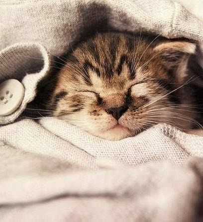 kitten in jumper