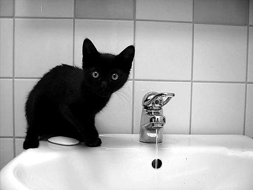 kitty for bath