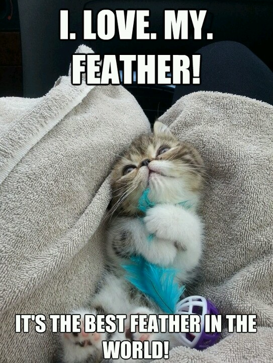 love my feather