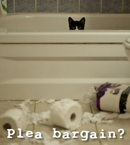 not guilty cat loo roll