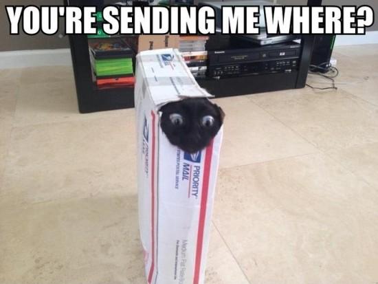 sending me where