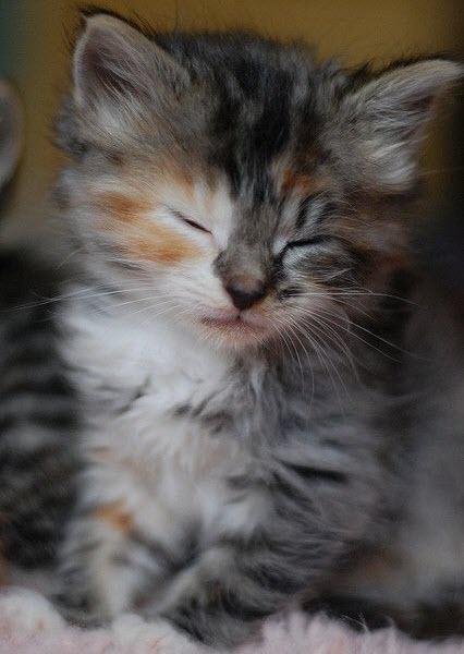 sleepy kitten ginger eye