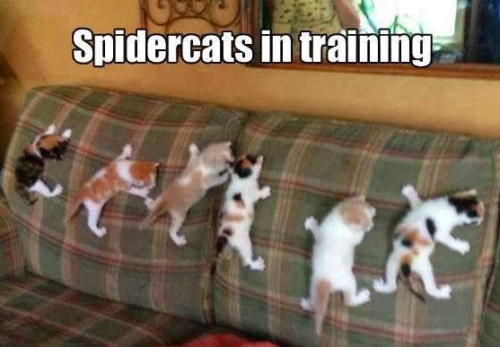 spidercats 2