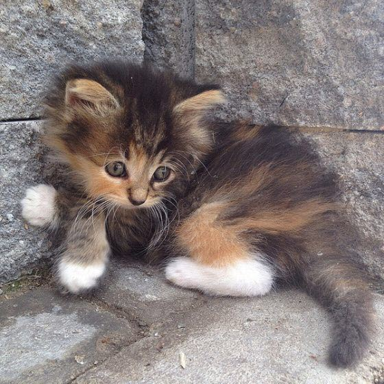 tiny cross paw kitten