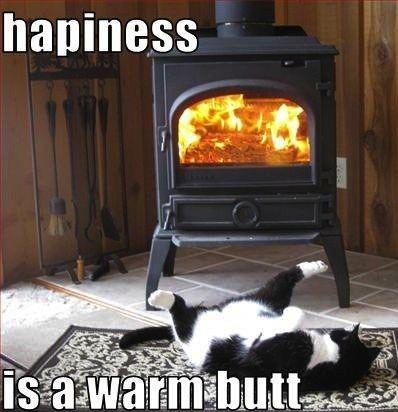 warm butt cat