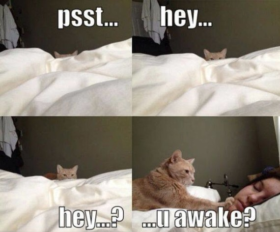 you awake again
