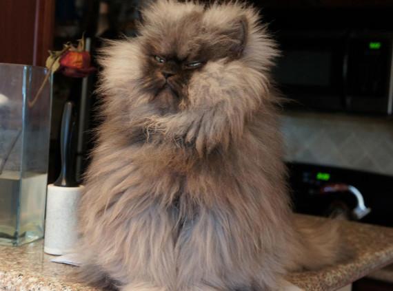 Colonel-Meow
