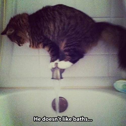 bath time cat problem