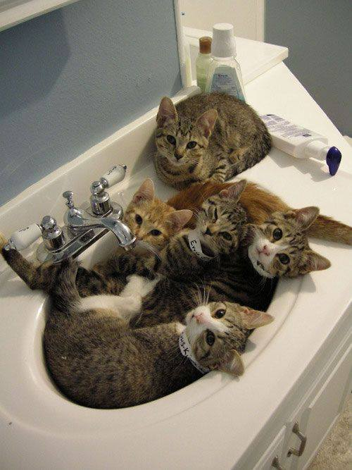 busy sink
