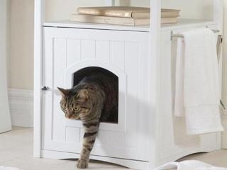 cat-washroom