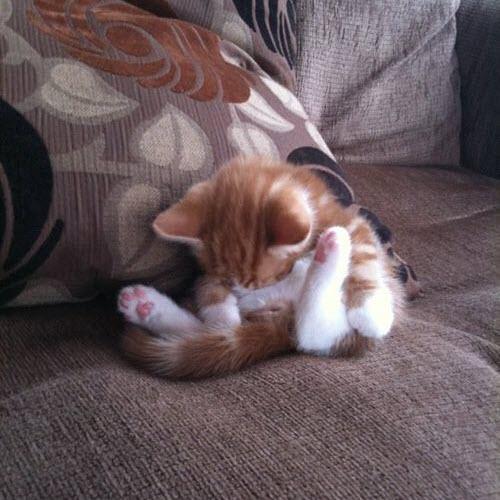 comfy kitty sleeping