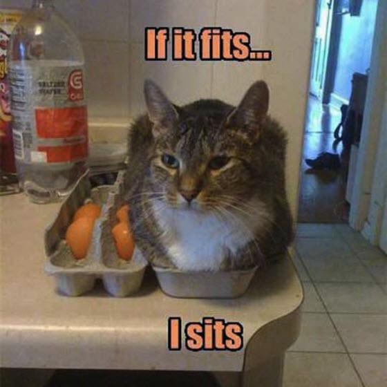fits sits cat egg